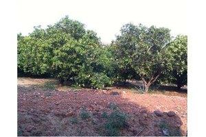 Photo: Aanaipakkam Village Arakkonam Tamil Nadu,