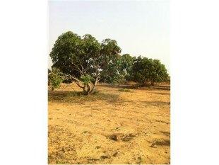 Photo: Aanaipakkam Village,Arakkonam, Tamil Nadu